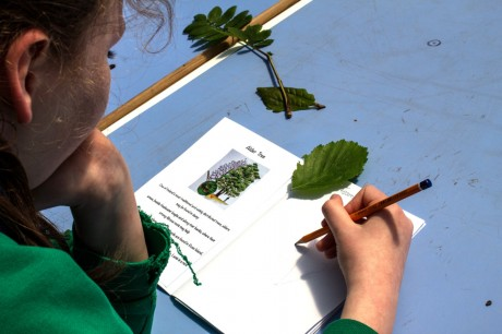 A young student from Caiseal na gCorr sketches the leaves she has learned about at Cluain na dTor.