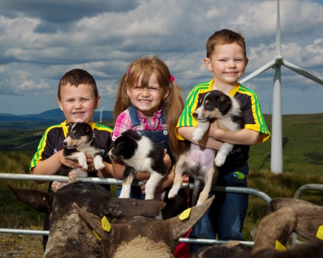 Oisín Robinson (age 6); Harper O'Donnell (age 5); Fíonn Robinson (age 4) with 7 week old, Border Collie pups, Ben, Lass and Roy at the launch of the Irish National Sheep Dog Trials.