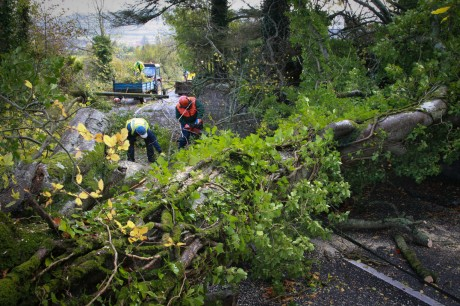 Council staff cut their way through an old tree following a recent storm. Photo Brian McDaid