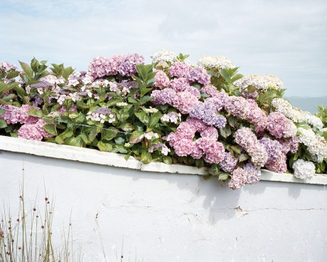 Linda Brownlee's Hydrangea. Festival highlights include a range of talks, workshops and exhibitions sure to interest professional and amateur photographers alike.