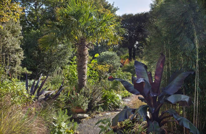 Trachycarpus fortunei, Ensete maurelii, Phormium 'Platt's Black', Cercidphyllum japonicum, Chusquea culeou and Salvia cv below palm in the Exotic Garden. Cluain Na d'Tor (Seaside Nursery Garden), Falcarragh. photography © Andrea Jones/Garden Exposures Photo Library