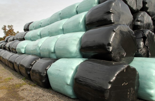 Wrapped bales of silage
