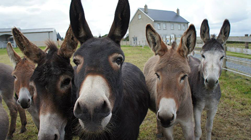 FT5S-donegal-donkey-sanctuary-group-facebook