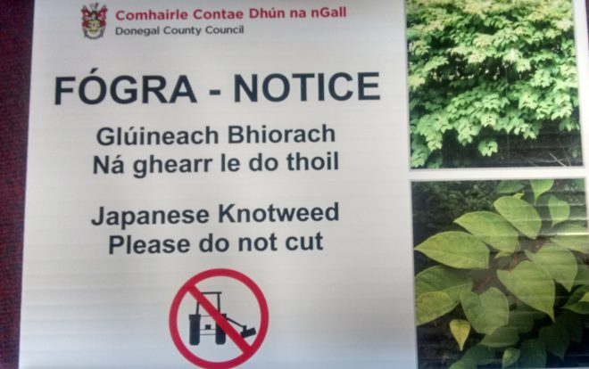 A notice from Donegal County Council regarding Japanese Knotweed.
