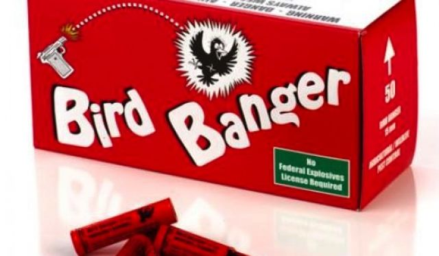 Council asks that traditional bird bangers only be used as a last resort