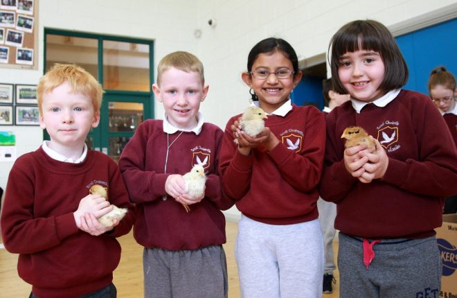Easter Chicks.... Infants pupils at Scoil Cholmcille, Kilmacrennan with 3 week old chicks hatched in the classroom from an incubator, Patrick Corcoran, Peter Doherty, Selia Sobin and Clare McGeever. Photo: Donna El Assaad